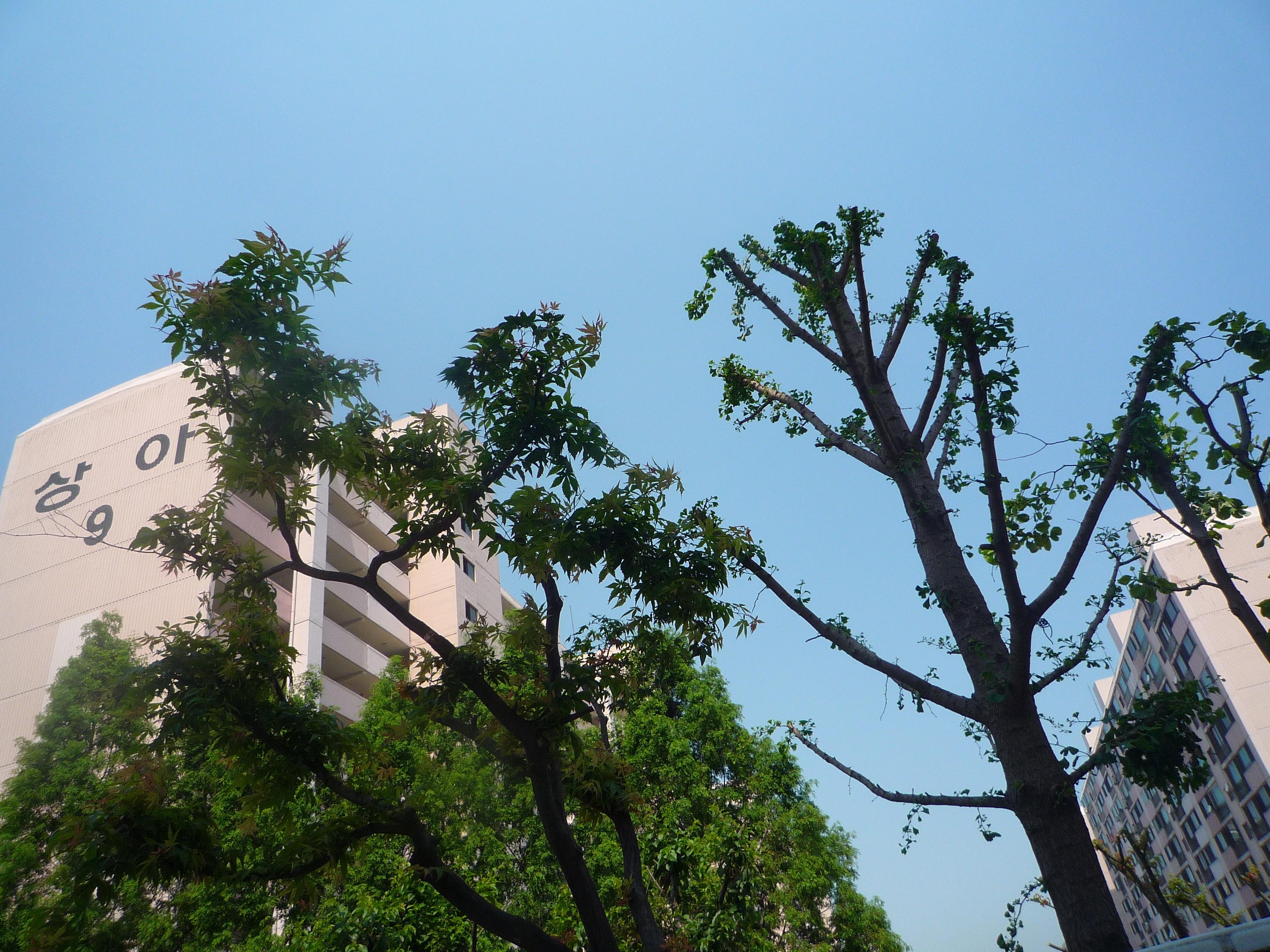 2009/06/05 학교풍경 첨부이미지