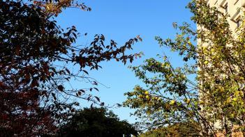 hafs의 가을 첨부이미지